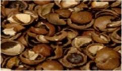 Macoddana Shells